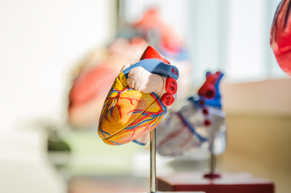 A 3D model of a heart. The model is in sharp focus and bright yellow, red and blue, while the background is blurred.