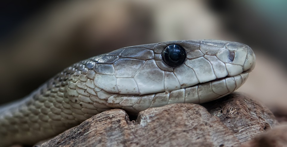 You Have Been Bitten by a Snake … Now What?